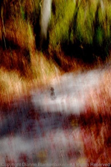 01 One Lone Leaf