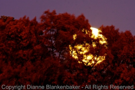 05 Moon rise through blowing trees