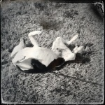 Hipstamatic-no retouch