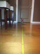 8 feet with flash