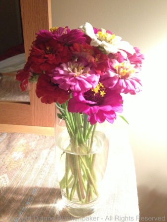 Flowers half in shadow, exposed for shadow with IS