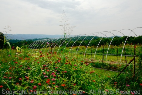 A field of flowers in front of repeating metal arches