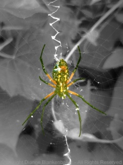 Cropped and edited 2x telephoto spider