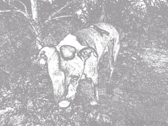 My silly dog as taken in Paper Camera using the Con Tours effect