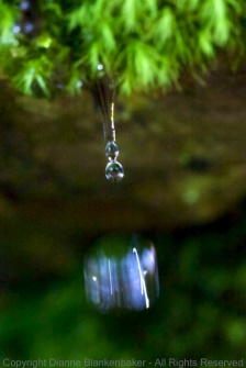 A water droplet falling from moss