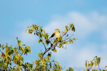 A Mocking Bird pointing the way