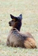 Chatty elk