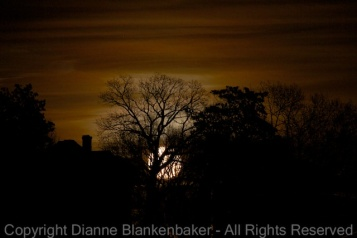 To focus on the trees in the foreground, I pre-focused on something approximately the same distance away using autofocus, then when the moon started to rise and provided enough light to see the trees, adjusted manually using live view at 10x magnification and a 2x magnifying loupe