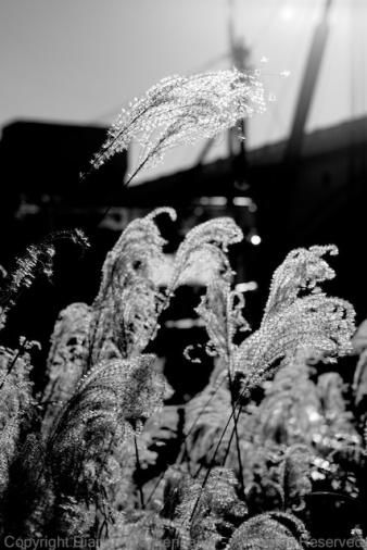 Same grass, same lens with the same dirt, but shot at f/5.6 and 65mm and with a different angle to the sun. I did not remove any flare spots in post processing--there was only one and it disappeared when I converted to B&W