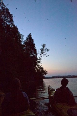 Bat Cave tour at Nickajack Lake